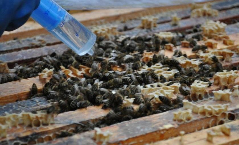 Как и чем подкармливать пчел? советы пчеловодам.