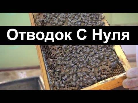 Формирование отводков пчел