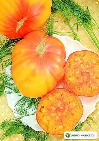 Невероятно сладкий и удивительно красивый томат «медовый салют»