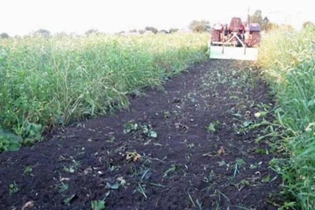 Сидераты и другие способы восстановления почвы