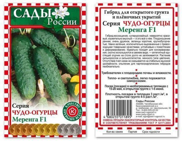 Выращивание огурцов: от выбора сорта до получения урожая