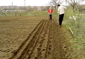 Когда сеять морковь в ленинградской области