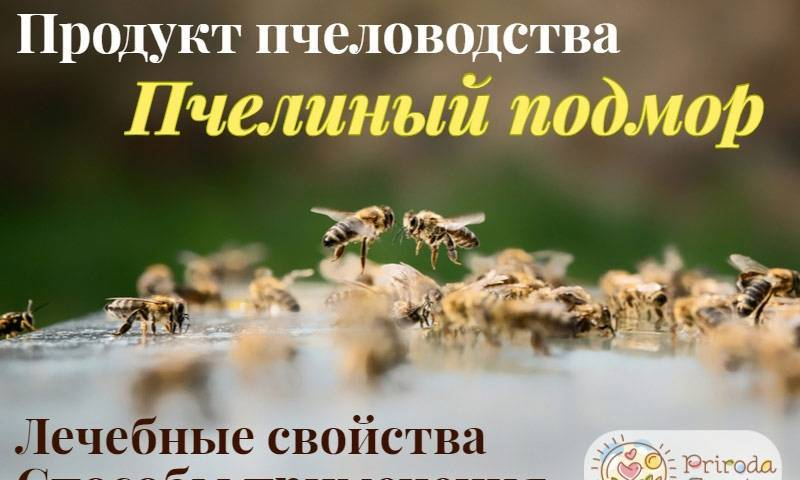 Пчелиный подмор: настойка на спирту