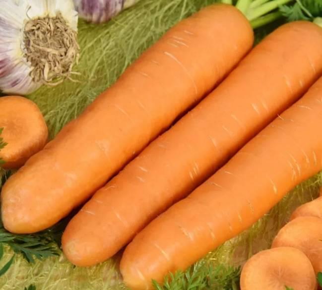 Морковь витаминная — описание сорта, фото, отзывы, посадка и уход