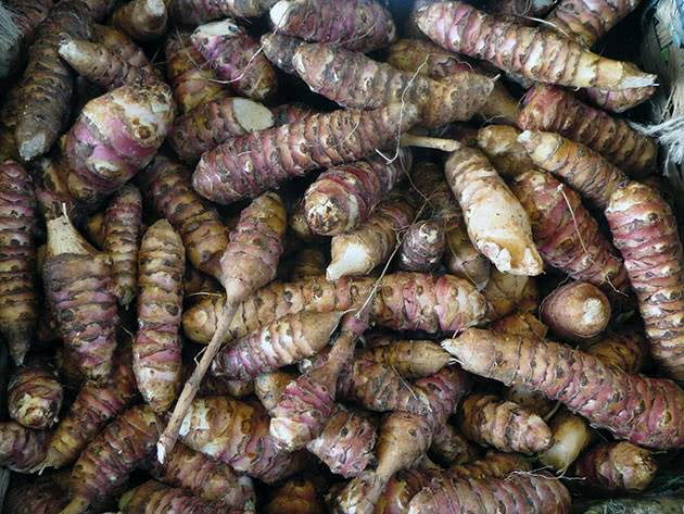 Рекомендации по правильному сбору урожая — когда можно выкапывать клубни топинамбура?