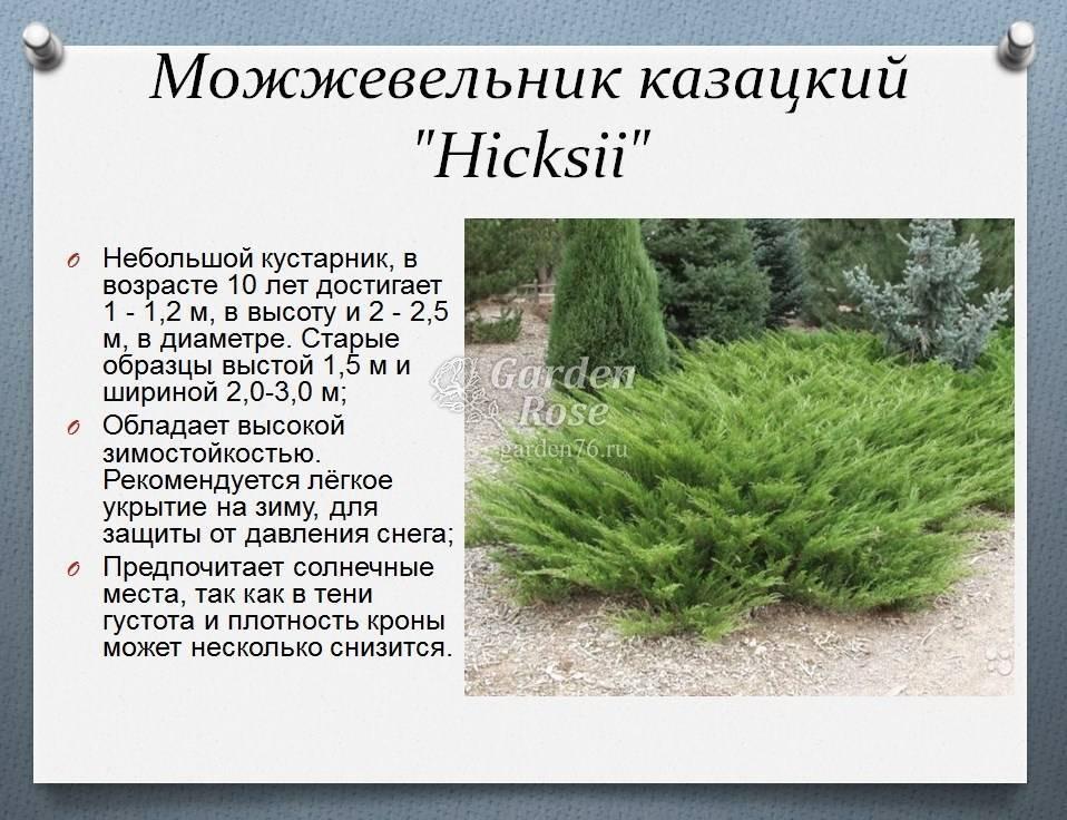 Как правильно укрывать можжевельник на зиму и чем лучше всего утеплить растение