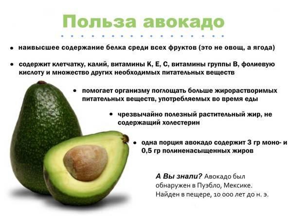Авокадо польза и вред. калорийность