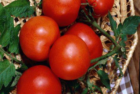 Помидоры лакомка: описание сорта, фото, отзывы