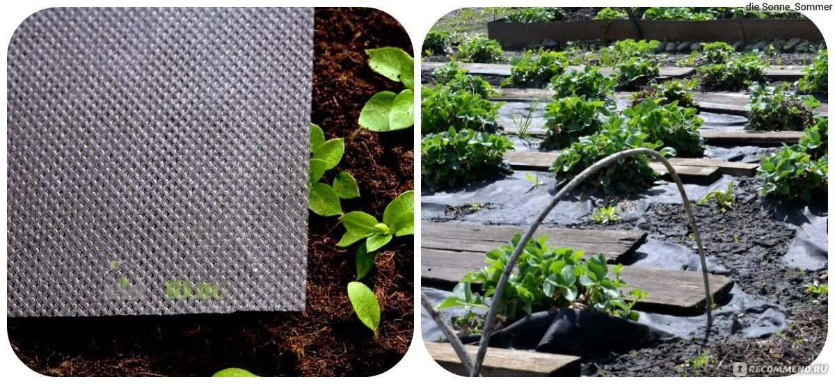 Укрывной материал от сорняков: как выбрать для грядок? способы использования укрывного материала от травы