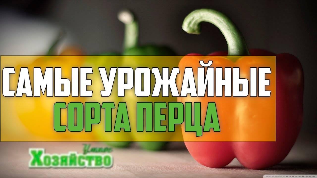 Перец гордость россии описание фото отзывы