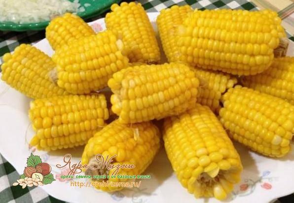 Чем полезна кукуруза в початках