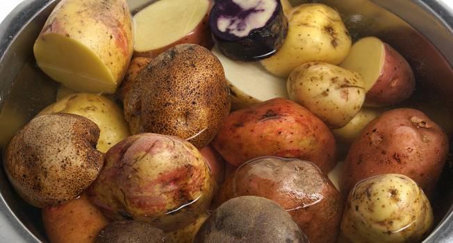 Картошка «мадейра» — что это за сорт, описание