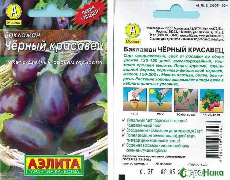 Баклажан черный красавец: описание, характеристики, особенности выращивания сорта.