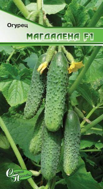 Огурец монолит f1: характеристики, техника выращивания, отзывы