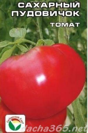 Один из лучших биф сортов из алтайской коллекции — томат розовый мясистый: описание помидоров
