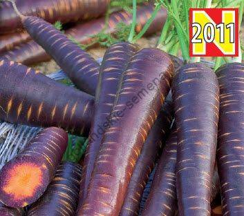 Фиолетовая морковь: описание сортов