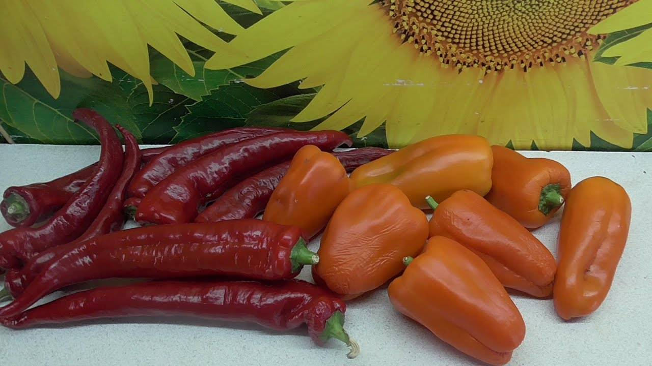 Как получить семена перца в домашних условиях. заготовка семян перца: сбор и хранение (+отзывы)