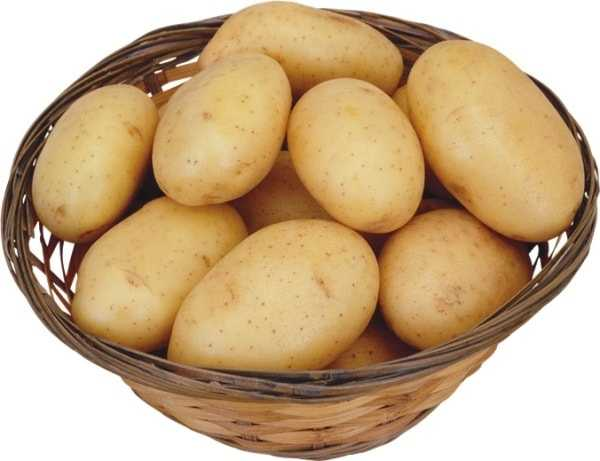 Картофель сорта латона: фото и описание, урожайность, выращивание