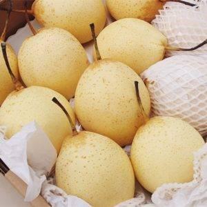 Китайская груша: полезные свойства и возможный вред