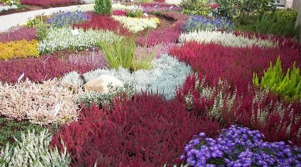 Астильба в ландшафтном дизайне (47 фото) с чем рядом сажать? сочетание многолетней астильбы на клумбе с хостой и другими растениями