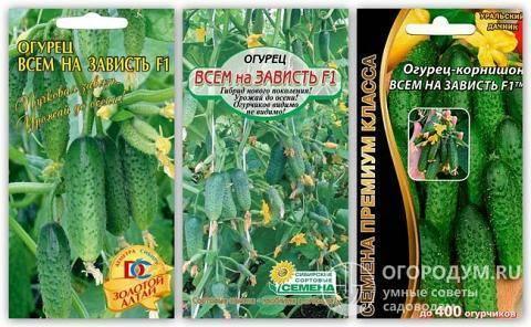 Характеристики огурца пучковое великолепие f1 — описание агротехники, реальные отзывы