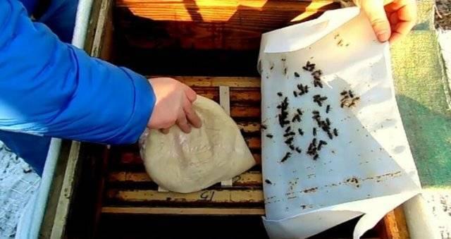 Кормление пчёл сахарным сиропом