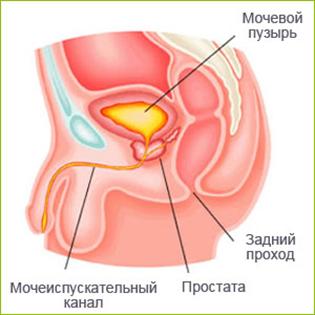 Прополис лечебные свойства и противопоказания при онкологии