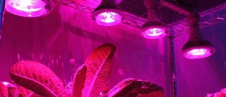 Подсветка для рассады. какие лампы для рассады лучше – ответит рассада.