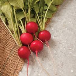 Редис дуро: описание сорта и 4 этапа выращивания