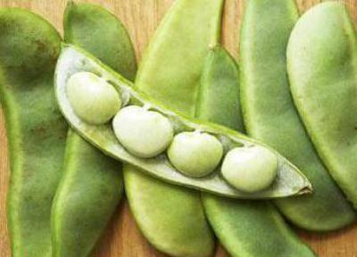 Отличный диетический продукт и перспективная огородная культура — фасоль лима