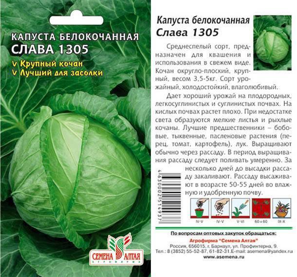 Подробное описание и свойства сорта капусты слава