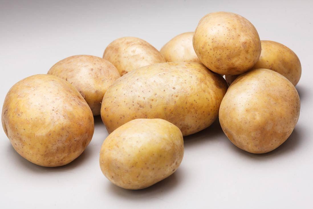 Описание сорта «ривьера». выращивание картофеля и уход за ним