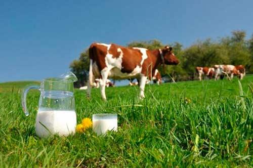Характеристика породы коров красная степная