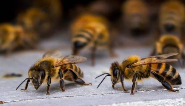 Сахарный сироп для подкормки пчел
