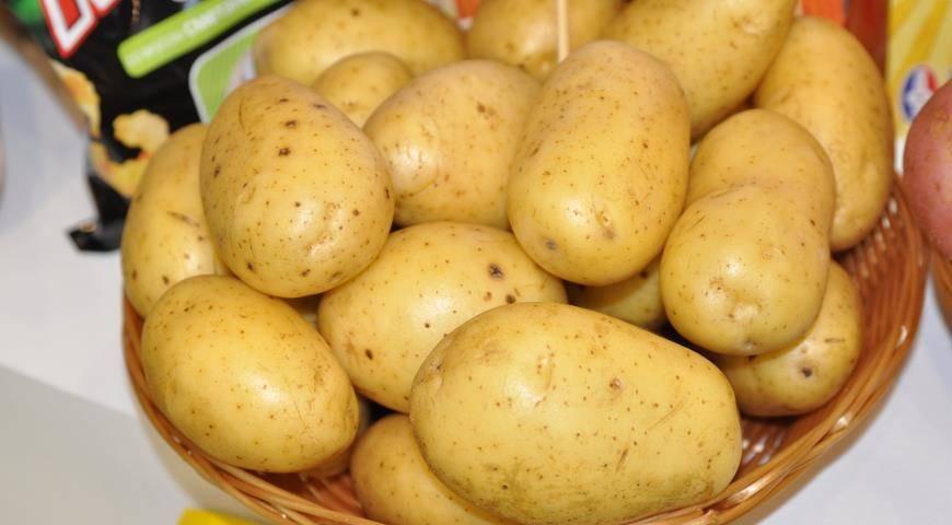 Леди клер — что это за ультраранний сорт картошки