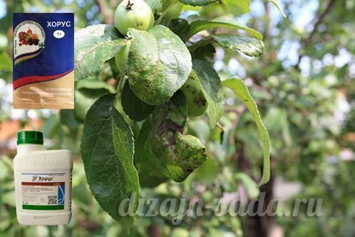 Инструкция применения препарата хорус для обработки растений