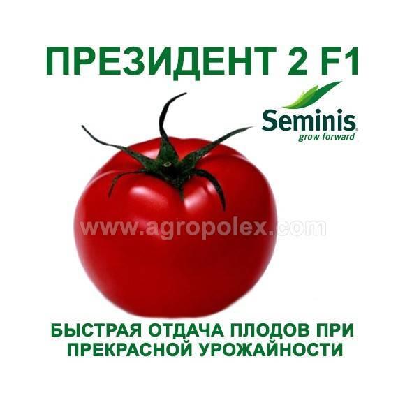 «президент 2» – скороспелый гибридный томат с серьезными урожаями, его описание и рекомендации по выращиванию