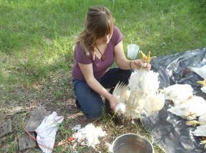 Как ощипать утку в домашних условиях