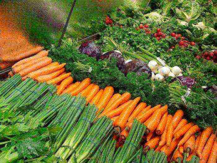 Как сажать морковь семенами в открытый грунт: секреты посева