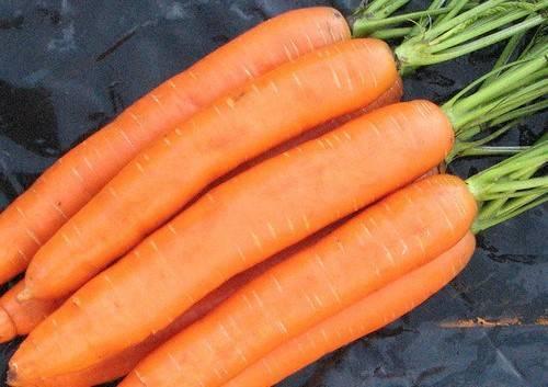 Морковь: как выбрать лучший сорт и правильно посадить весной и осенью?