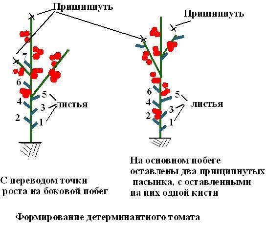 Для новичков пошагово: как пасынковать помидоры в теплице