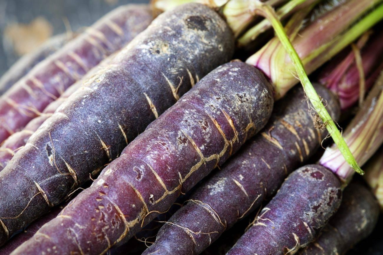 Описание сортов фиолетовой моркови