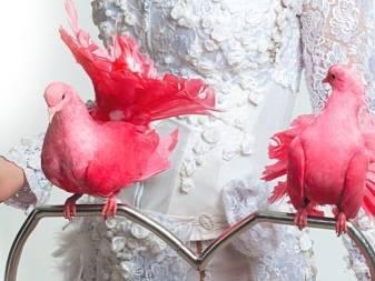 Фламинго птица: описание, виды, фото, интересные факты, ареал обитания