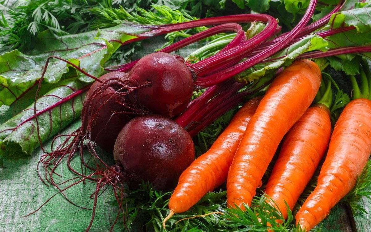 Удобрения для моркови и свеклы