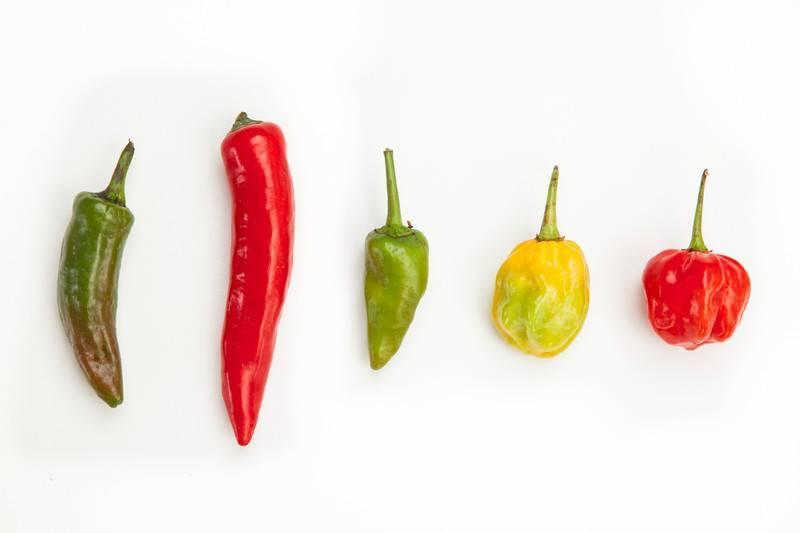 20 лучших сортов острого (горького) перца для открытого грунта