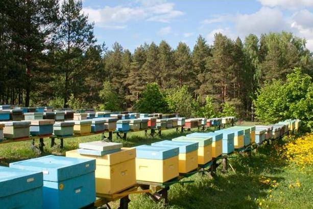Особенности пчеловодства как бизнеса