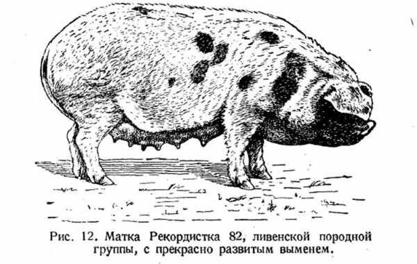 Выращивание поросят - рекомендации ветспециалистов   ветеринарная служба владимирской области