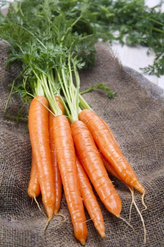 Морковь сорта «королева осени»: описание и основные особенности
