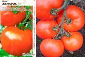 Помидоры кемеровец: характеристика и описание сорта, фото