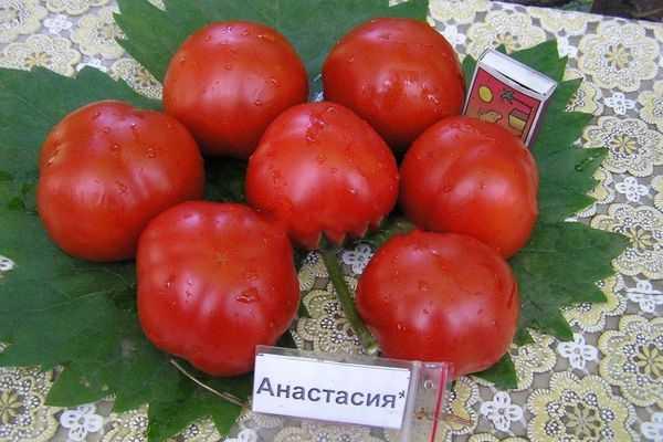 Описание томата сахарная настасья и агротехника культивирования